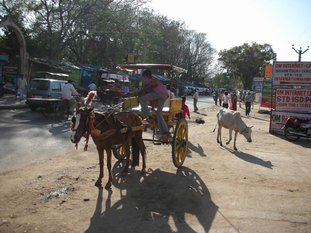 働く馬と、高等遊民的な牛