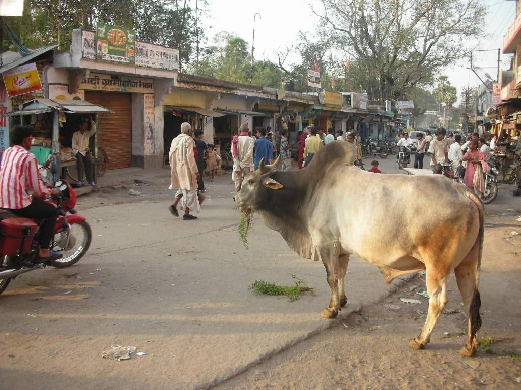 王様的な牛