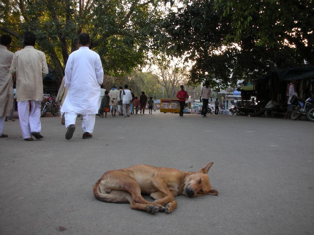 道のまんなかで寝る犬
